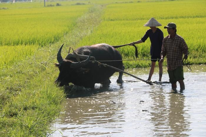5--voyage Vietnam-fév 2020 - Jour9
